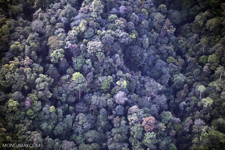 Borneo rainforest -- sabah_0363