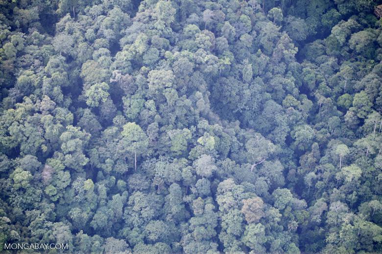 Borneo rainforest -- sabah_0364