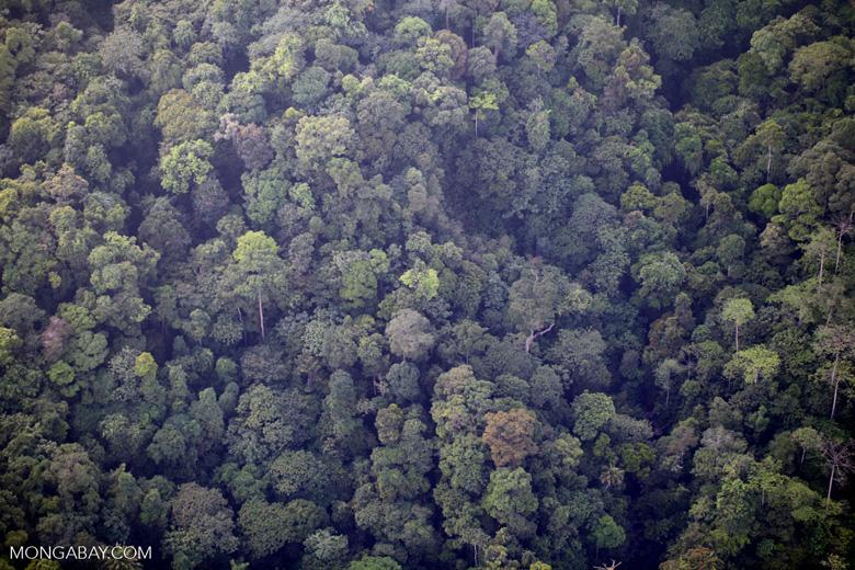 Borneo rainforest -- sabah_0370