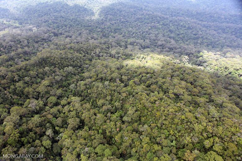 Borneo rainforest -- sabah_0380