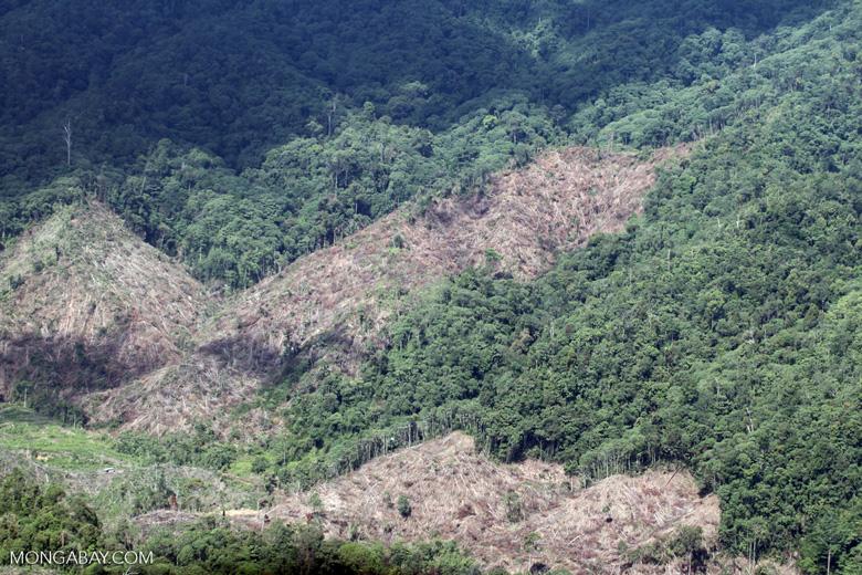 Loss of rainforest in Malaysian Borneo