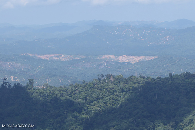Chopping down rainforest in Sabah, Malaysia -- sabah_0392