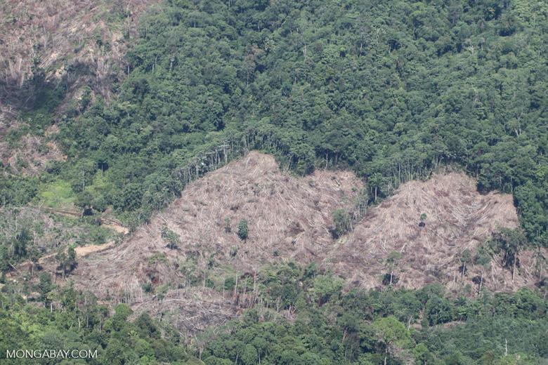 Deforestation -- sabah_0399
