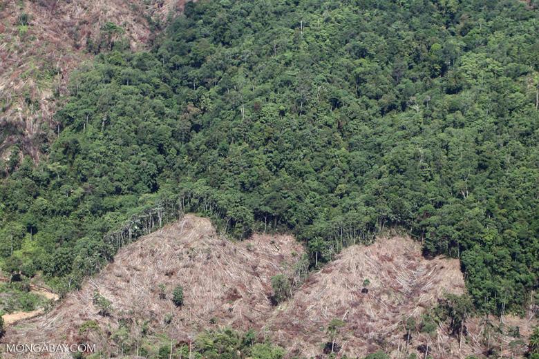 Deforestation -- sabah_0400
