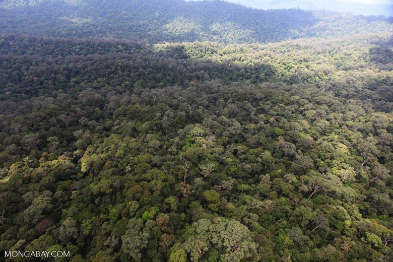 Borneo rainforest -- sabah_0410