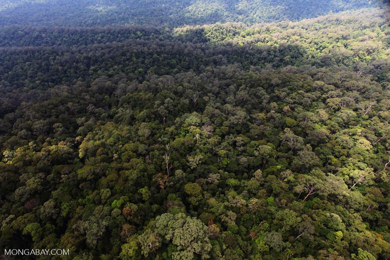 Borneo rainforest -- sabah_0413