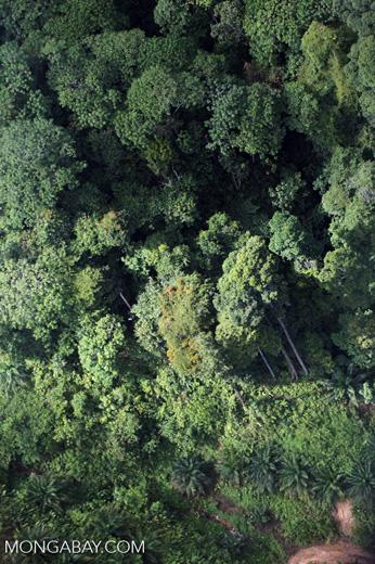 Oil palm plantation -- sabah_0432