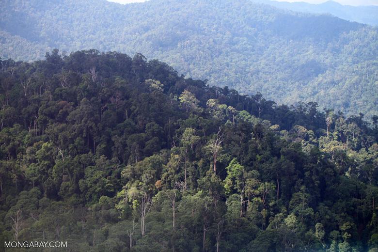 Borneo rainforest -- sabah_0433