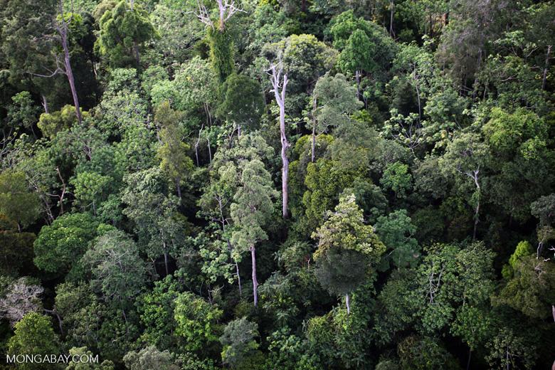 Borneo rainforest -- sabah_0445