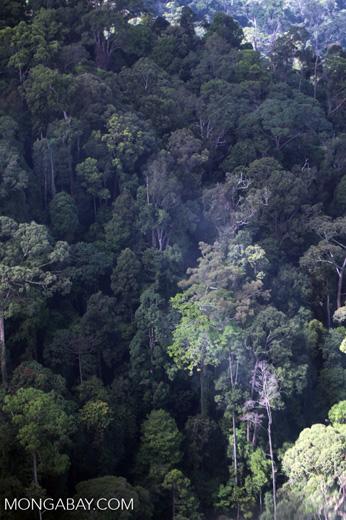 Borneo rainforest -- sabah_0467