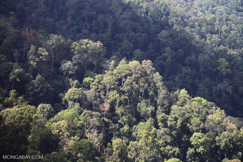 Borneo rainforest -- sabah_0469