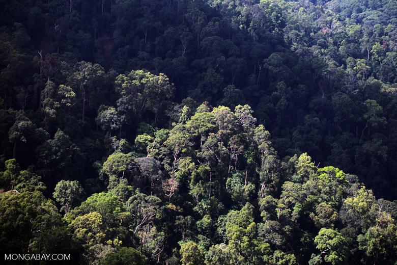Borneo rainforest -- sabah_0470