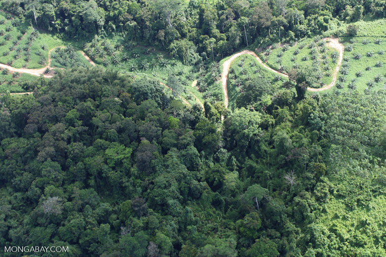 Oil palm plantation -- sabah_0528