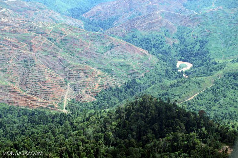 Deforestation in Malaysia -- sabah_0532