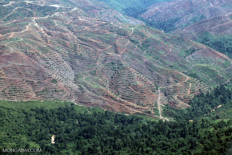 Forest loss in Sabah, Malaysia