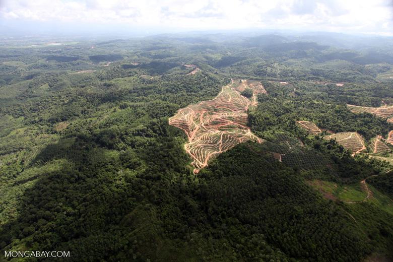 Oil palm plantation -- sabah_0562