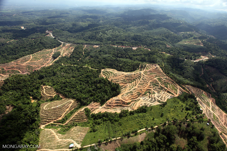 Oil palm plantation -- sabah_0587