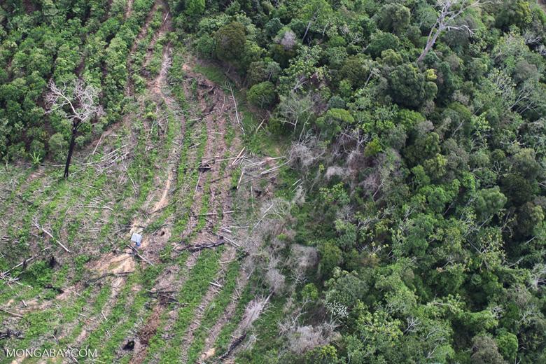 Deforestation in Borneo -- sabah_0639