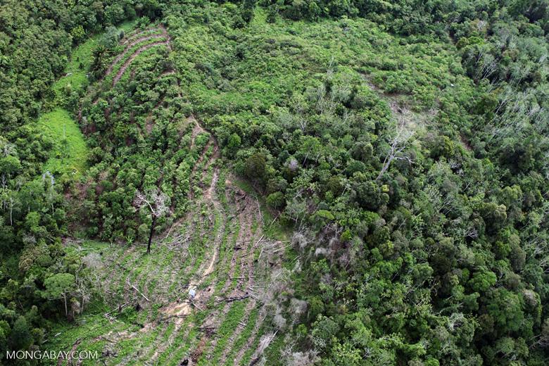 Deforestation in Borneo -- sabah_0640