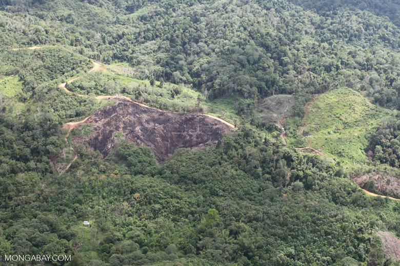 Deforestation in Borneo -- sabah_0650