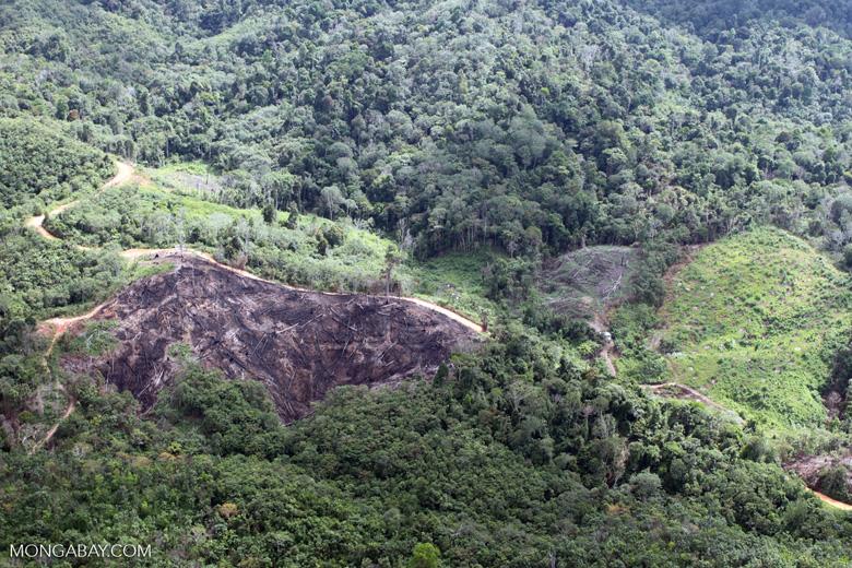 Deforestation in Borneo -- sabah_0651