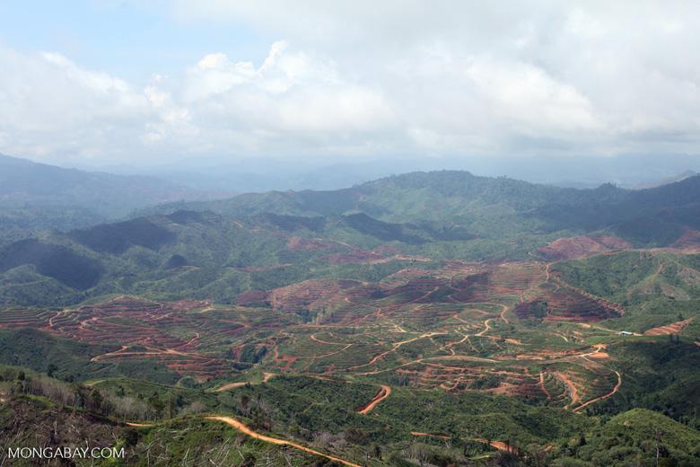 Deforestation for oil palm -- sabah_0662