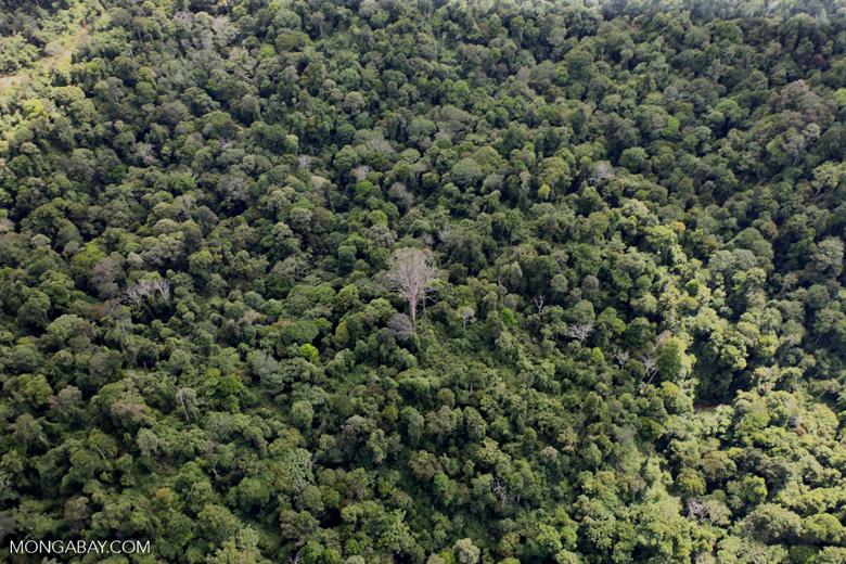Borneo rainforest -- sabah_0693