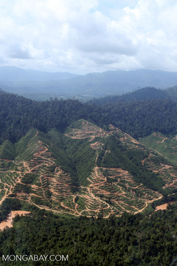 Deforestation for oil palm -- sabah_0701