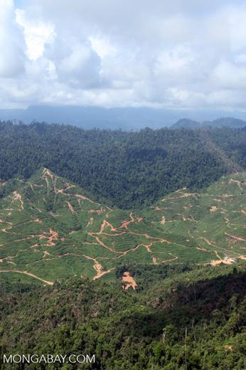 Deforestation for oil palm -- sabah_0703