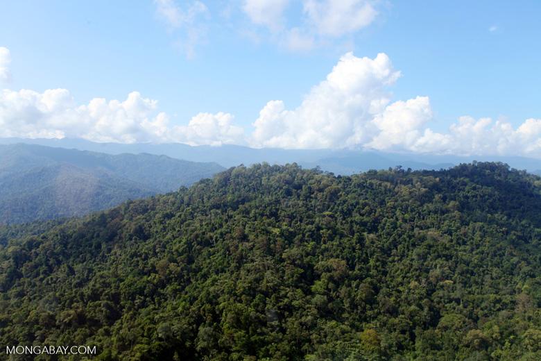 Borneo rainforest -- sabah_0704