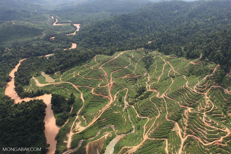 Deforestation for oil palm -- sabah_0718