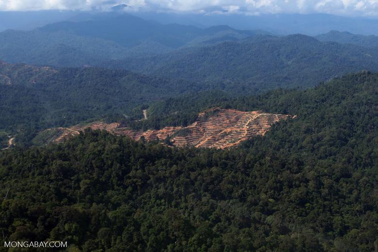 Deforestation for oil palm -- sabah_0722