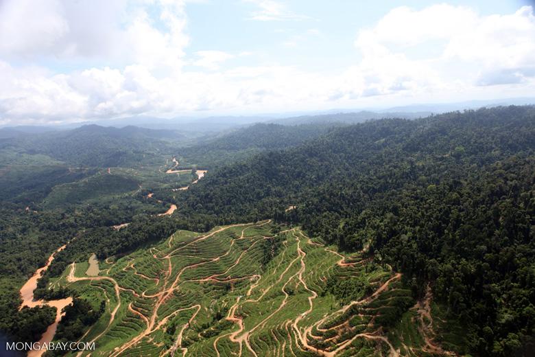 Deforestation for oil palm -- sabah_0726