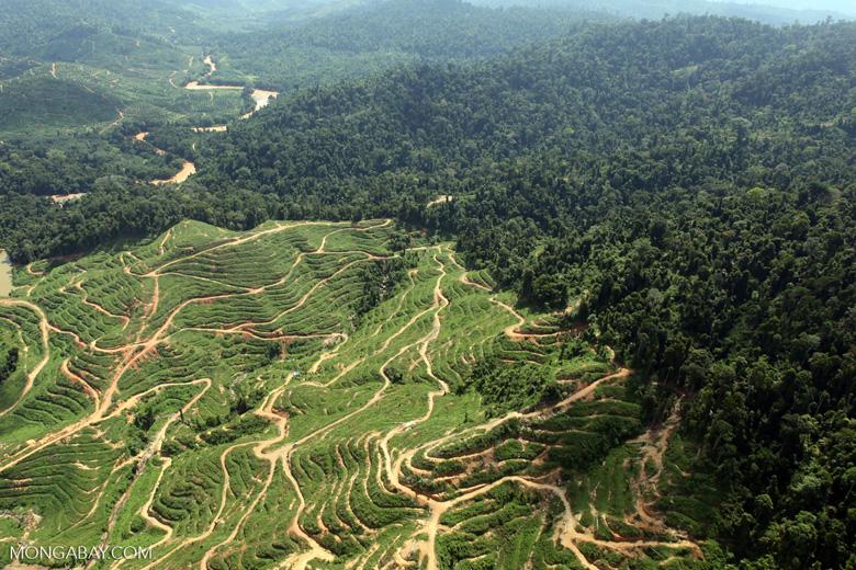 Deforestation for oil palm -- sabah_0727