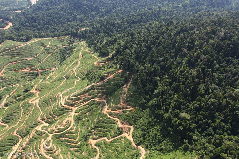 Deforestation for oil palm -- sabah_0728