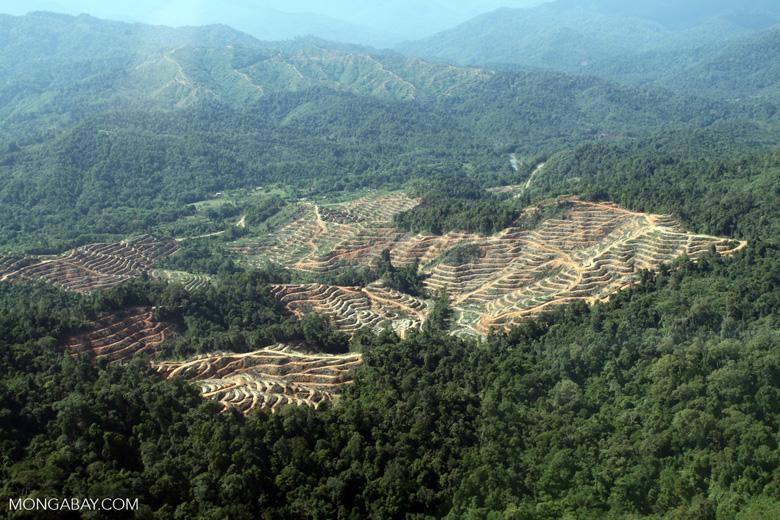Deforestation for oil palm -- sabah_0734