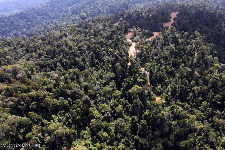 Logging road -- sabah_0741