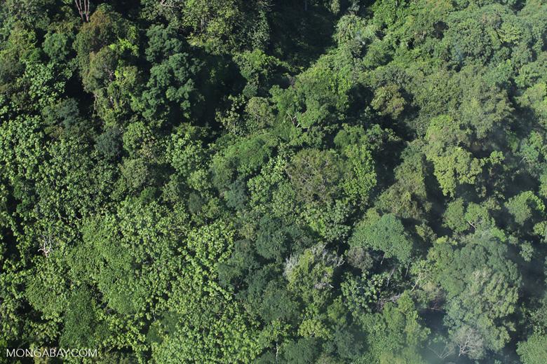 Borneo rainforest -- sabah_0762