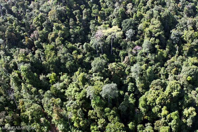 Borneo rainforest -- sabah_0785
