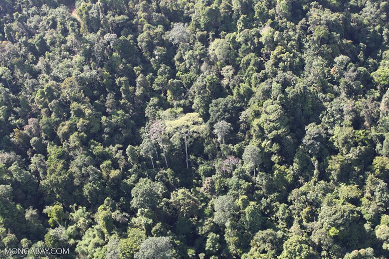 Borneo rainforest -- sabah_0788