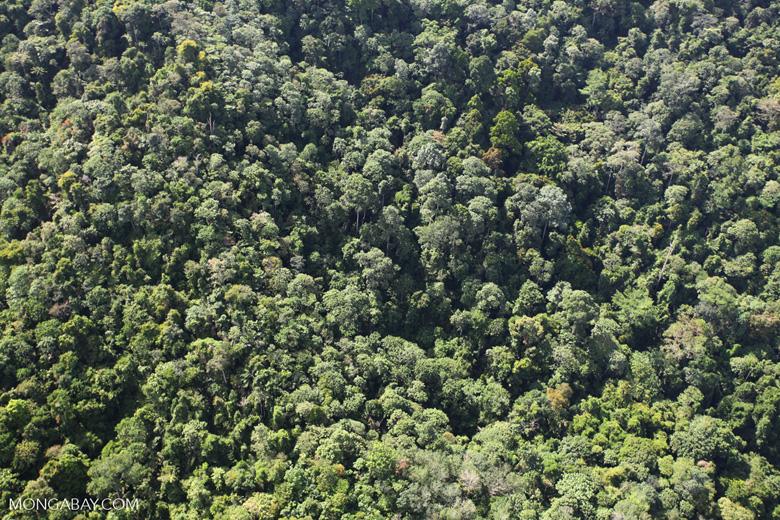 Borneo rainforest -- sabah_0800