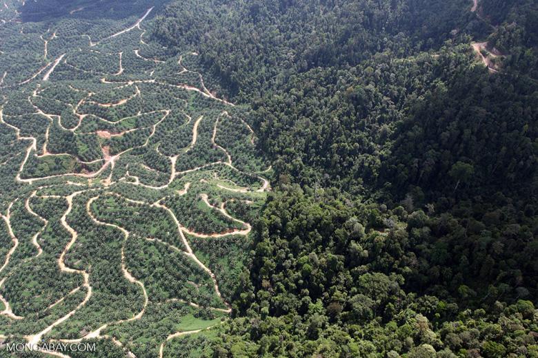Oil palm plantation -- sabah_0801