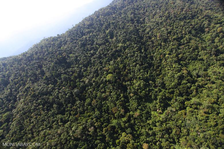 Borneo rainforest -- sabah_0813