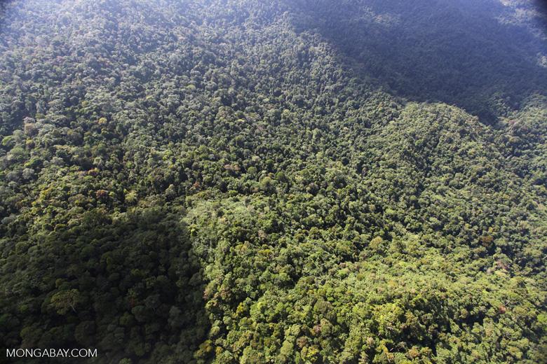 Borneo rainforest -- sabah_0822
