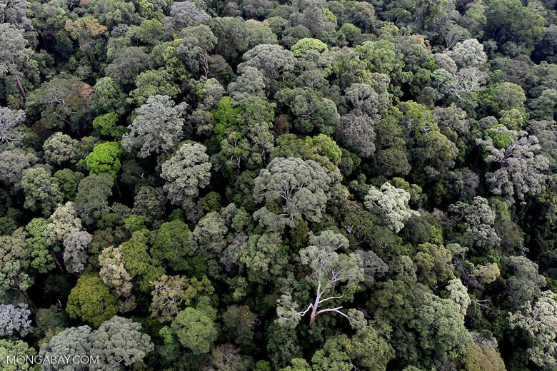 Borneo rainforest -- sabah_0867