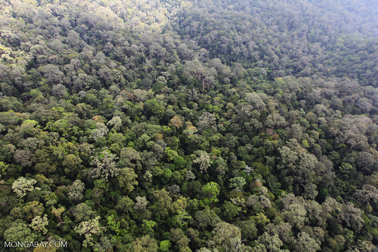 Borneo rainforest -- sabah_0871
