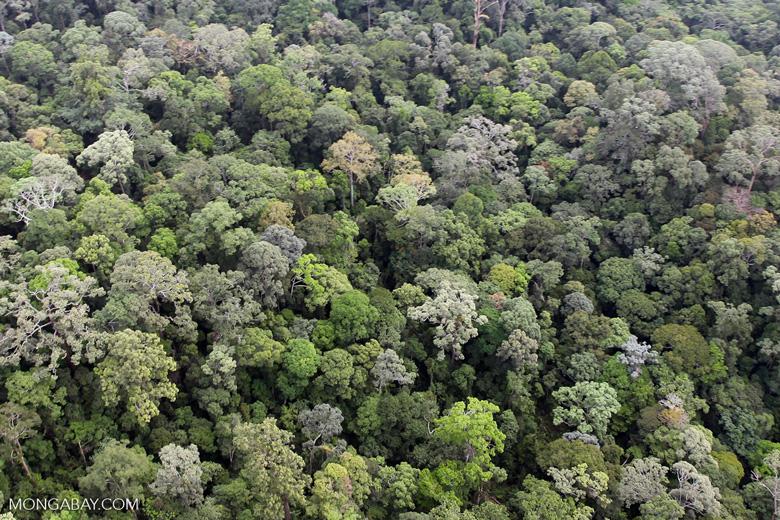 Borneo rainforest -- sabah_0874