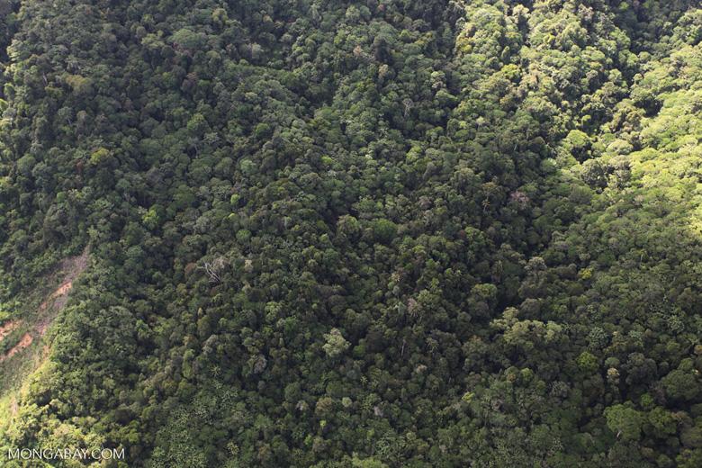 Borneo rainforest -- sabah_0943