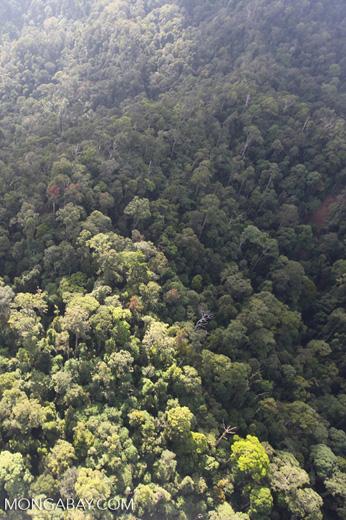 Borneo rainforest -- sabah_0948