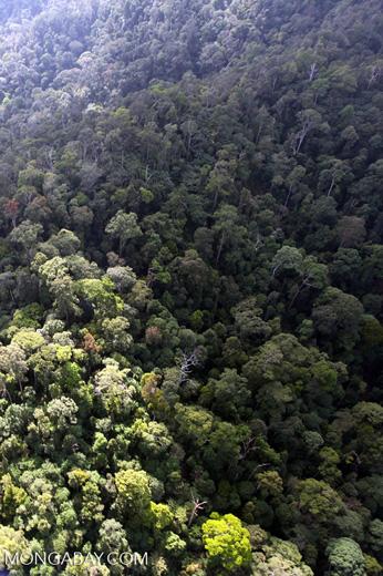 Borneo rainforest -- sabah_0962